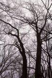 雾在冬天森林里 免版税库存图片