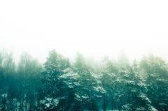 雾在冬天森林里 库存图片