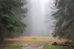 雾在多雨森林里 库存照片