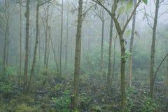 雾在密林 库存照片