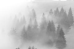 雾在小山befor攀登日出 免版税库存图片