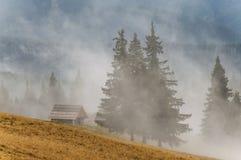 雾在山森林里 免版税库存图片