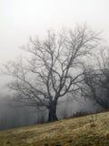 雾在春天森林 免版税库存照片