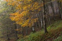 雾在有薄雾的森林里 免版税库存照片