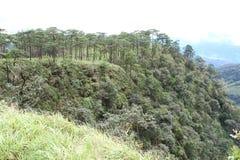 雾在杉木森林里 库存照片