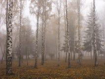 雾在桦树树丛里在冷的早晨在11月 免版税图库摄影