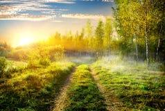 雾在桦树树丛里 库存照片