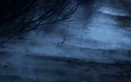 雾在森林背景中 库存照片