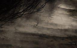 雾在森林背景中 免版税库存照片