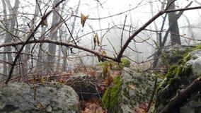 雾在森林里在秋天 股票录像