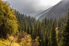雾在森林里 图库摄影