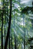 雾在森林里 免版税图库摄影