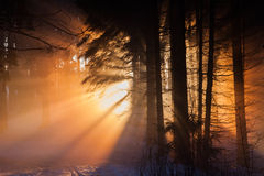 雾在森林里 免版税库存图片