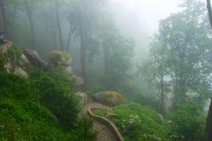 雾在森林里 库存照片