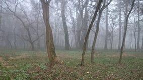 雾在森林 库存图片