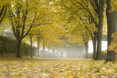 雾在秋天公园 图库摄影