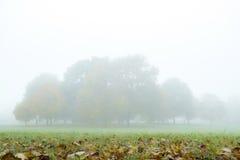 雾在秋天公园 库存图片
