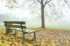 雾在秋天公园 免版税库存照片