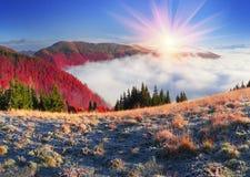 雾在秋天 库存照片