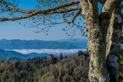 雾在谷在早期的春天垂悬 图库摄影