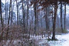 雾在雪下的秋天森林 免版税库存照片