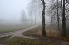 雾在11月 库存图片