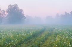 雾在水的草甸早晨 免版税图库摄影