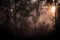 雾在水的草甸早晨 库存照片