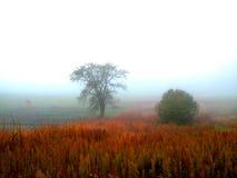 雾在水的草甸早晨 免版税库存图片