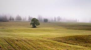 雾在Tatras 免版税库存照片
