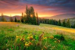雾房子横向早晨剪影结构树 绿色草甸和五颜六色的天空在日出 免版税图库摄影