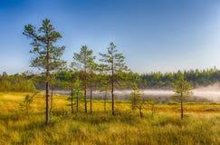 雾房子横向早晨剪影结构树 免版税图库摄影
