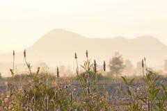 雾房子横向早晨剪影结构树 图库摄影
