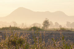 雾房子横向早晨剪影结构树 库存图片