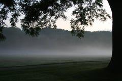 雾早晨 库存照片