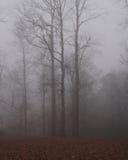 雾早晨 库存图片