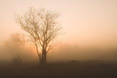雾早晨 免版税库存照片