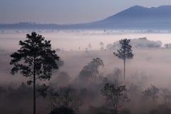 雾早晨slangluang泰国钨 免版税库存图片