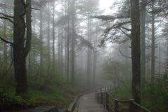 雾森林早晨 免版税库存照片