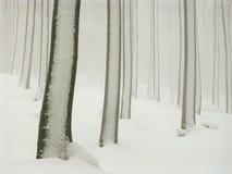 雾森林雪冬天 库存照片