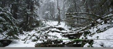 雾森林风景雪谷冬天 库存图片