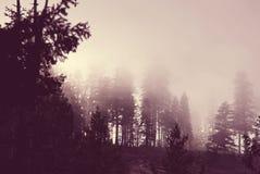 雾森林 免版税库存照片