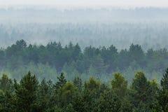 雾森林 免版税图库摄影