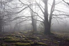 雾森林 库存照片