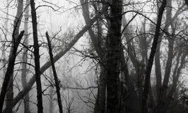 雾森林11月 库存照片