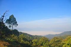 雾海与森林的作为前景 库存照片