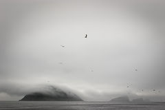 雾海岛 图库摄影