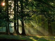 雾温暖森林的阳光 免版税库存图片