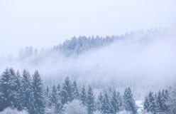 雾的冬天具球果森林 免版税库存照片