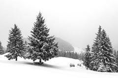 雾的冬天森林 免版税图库摄影